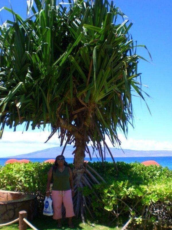10 Must Do Things in Maui, Hawaii! My Mother under a beautiful palm on Kanaapali Beach