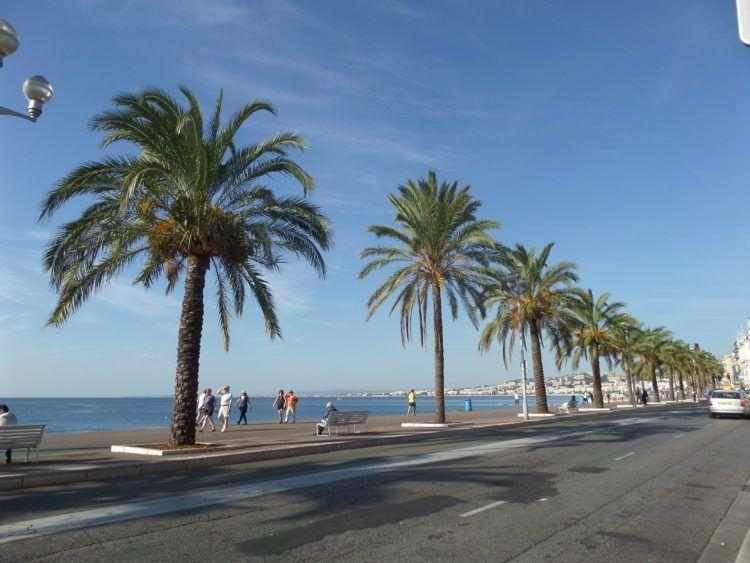 Palm Tress lining Ponchettes Beach in Nice