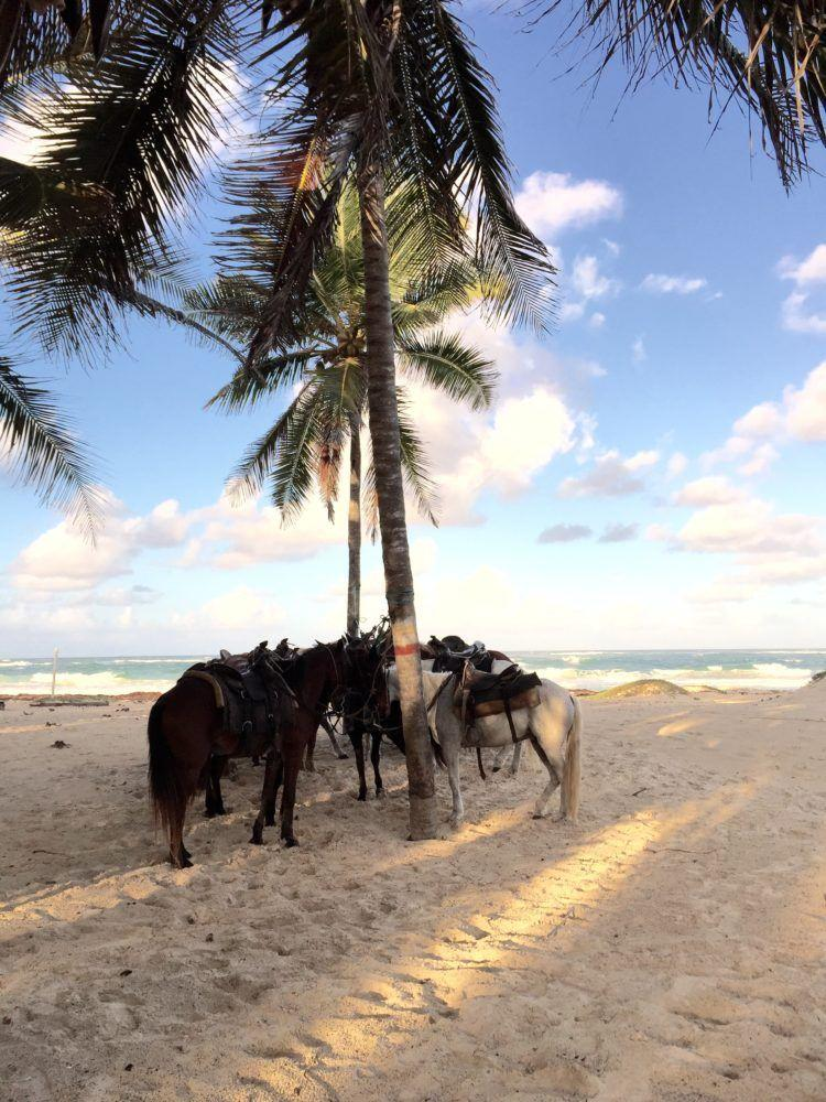 Horseback Riding on the Beach in Punta Cana Dominican Republic!
