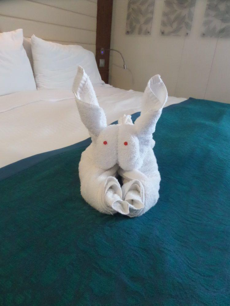 Cruise towel origami! A bunny in my room on Norwegian Epic!