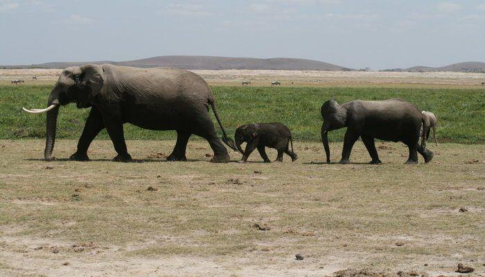 Experience a Safari Adventure in Kenya! This is a travel adventure that is surely on your bucket list!