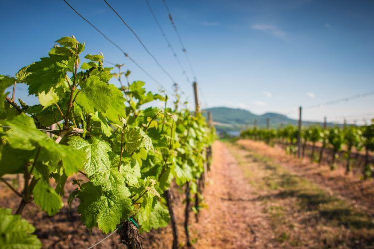 For wine lovers, get to know Willamette Valley Oregon!