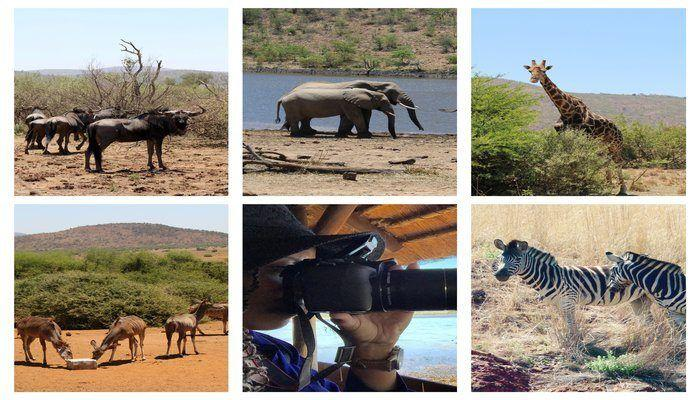 A Safari Day Trip from Johannesburg