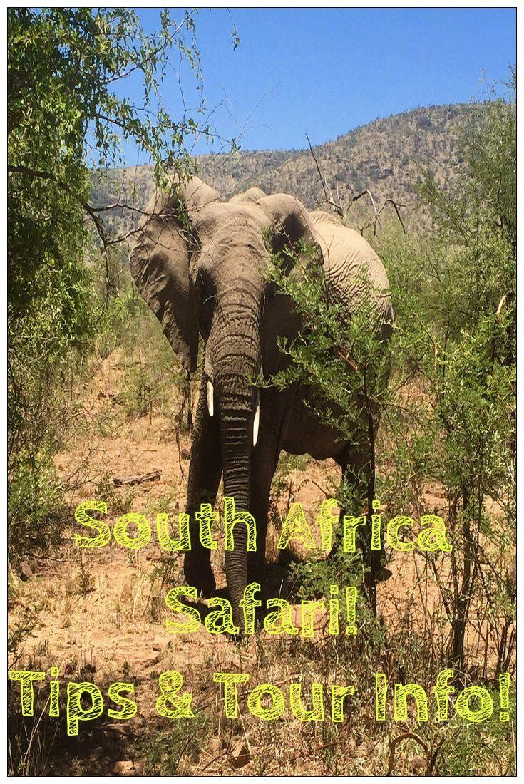 A Safari Day Trip from Johannesburg in South Africa! Includes full tour details and safari tips!