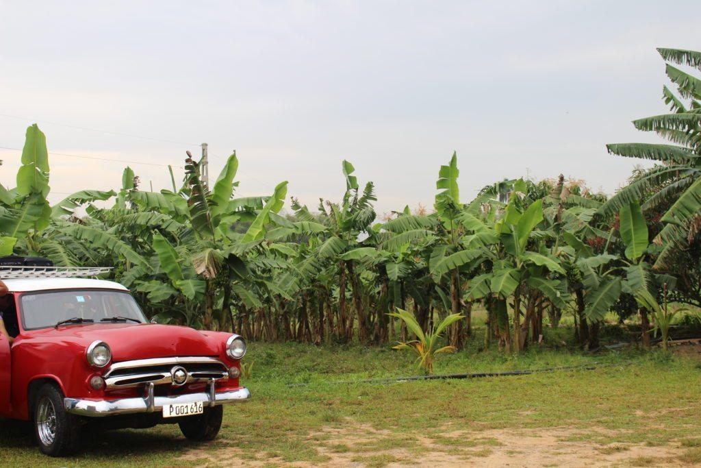 How To Spend 7 Days in Cuba! A full travel itinerary with stops in Havana, Vinales Valley, Cienfuegos and Trinidad!