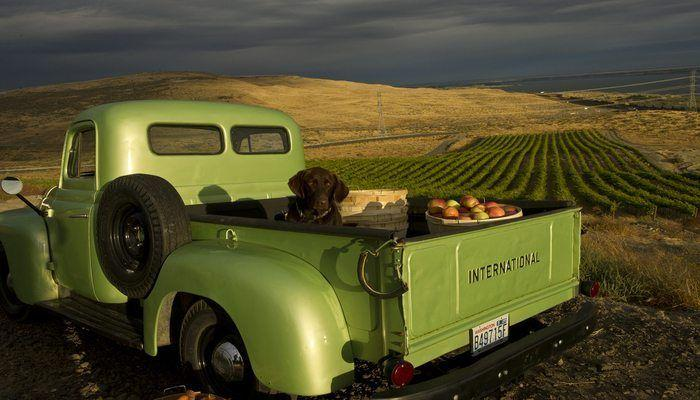 Get to Know Mercer Wines In Washington State!