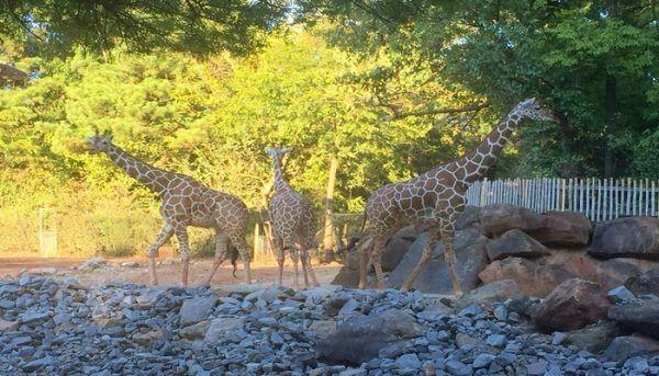 Zoo Atlanta's Sippin' Safari Event Recap!