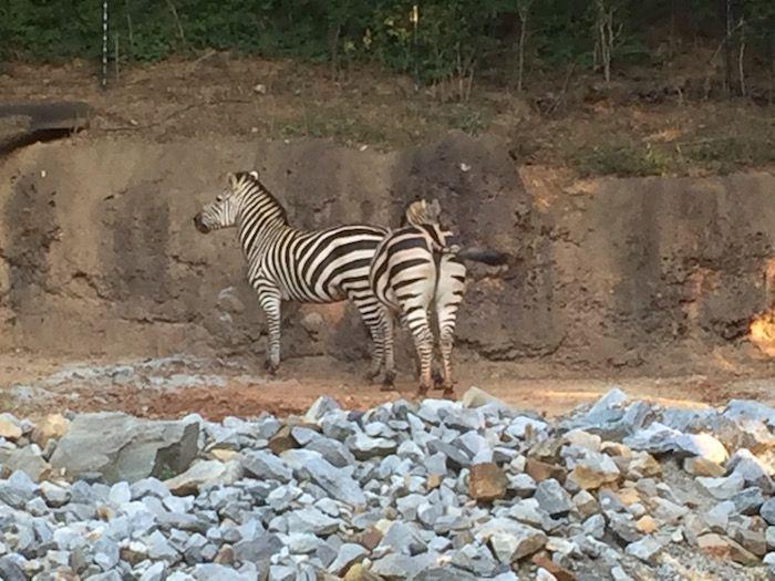 Zoo Atlanta's Sippin' Safari