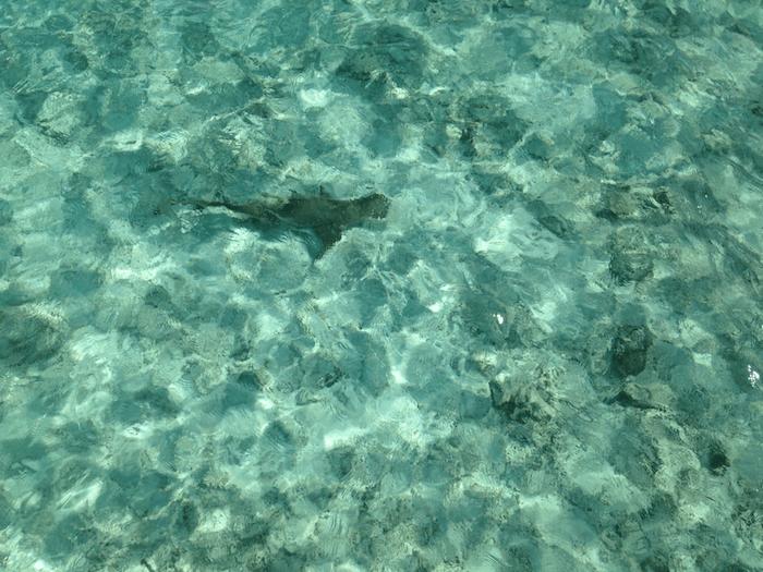 fish in the ocean water