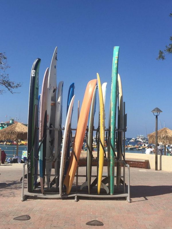 rack of surf boards on Catalina Island