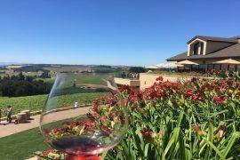 Wine Tasting in Oregon Wine Country at Willamette Valley Vineyards! Take a look at a tour of the winery, a delicious lunch and gorgeous Willamette Valley views!