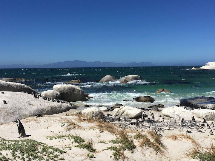 Cape Town Road Trip along the Cape Peninsula. Boulders beach, Muizenberg Beach, Cape of Good Hope, Cape Point