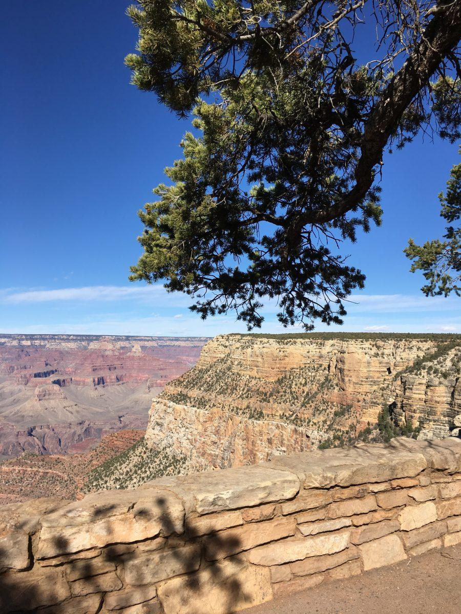 Overlooking Grand Canyon